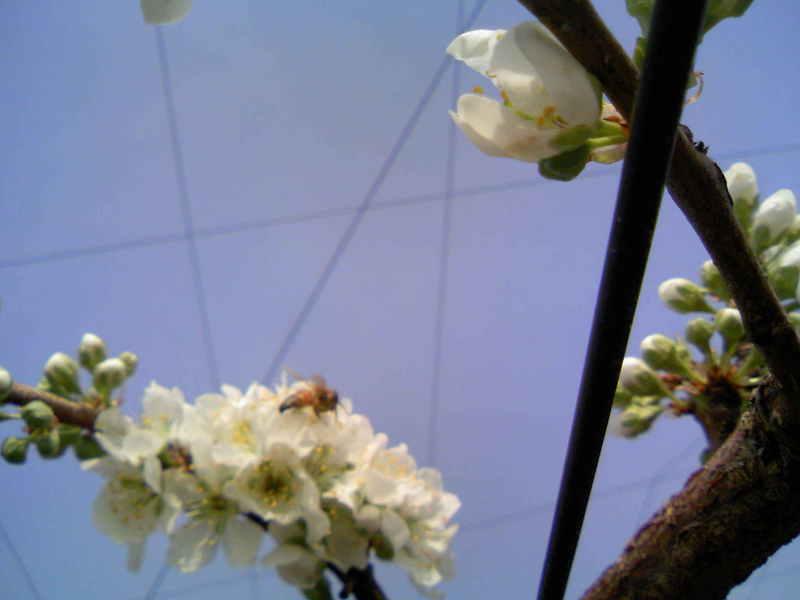 ミツバチくん