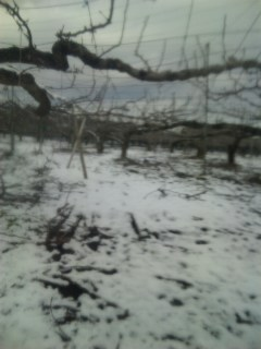 融けない雪