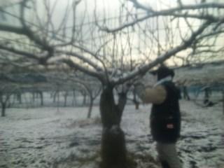 今朝も積雪
