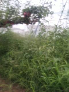 雑草の勢い